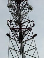 zdjęcie stacji bazowej Sportowa 11 Era (Era GSM900/GSM1800/UMTS) p1010463.jpg