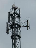 zdjęcie stacji bazowej Sportowa 11 Orange (Orange GSM900/GSM1800) p1010457.jpg