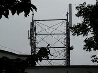 zdjęcie stacji bazowej Armii Krajowej 15 (Era GSM900/GSM1800/UMTS) p1020454.jpg