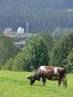 zdjęcie stacji bazowej Sywarne 32 (Era GSM900) p1020934.jpg