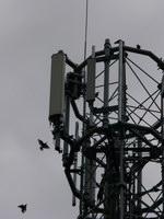 zdjęcie stacji bazowej Bałtycka 25c (Orange GSM900/GSM1800/UMTS) p1080667.jpg