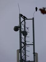 zdjęcie stacji bazowej Korony Polskiej 25 (Plus GSM900/GSM1800/UMTS) p1030742.jpg