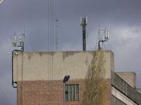zdjęcie stacji bazowej Stalmacha 18 (Era GSM900/GSM1800/UMTS, Orange GSM900/GSM1800) p1030951.jpg